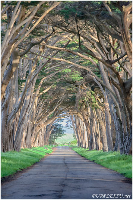 Point Reyes, Cypress Tree Tunnel